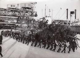 PHOTO ORIGINALE (13x18)  Suede) Port De Gavle Le Sapin De Noel Est Pret A Etre Embarqué Pour Paris - Lieux