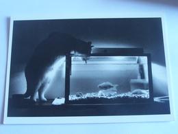 Un Chat Qui Boit Dans Un Aquarium - Katzen