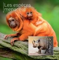 Niger 2013, Animals, Monkey, Rhino, BF - Chimpanzés