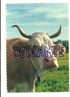 Vache. Que Rumine-t-elle? Linda Color. Couleurs Naturelles. Bovey & Cie Editeurs, Genève - Vaches