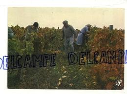 Vignerons. Prestige Cevennes. Cap-théojac. Photo Claude Roy - Vignes