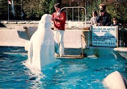 73290677 Vancouver_British_Columbia Beluga Or Arctic White Whale Stanley-Park Aq - Canada