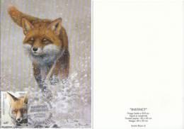 Red Fox (Vulpes Vulpes) - 1985-.. Oiseaux (Buzin)