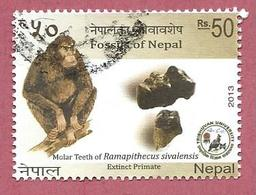 NEPAL USATO - 2013 - FOSSILI - Ramapithecus Sivalensis - 50 Rs - Michel NP 1124 - Nepal