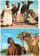 Kameel  Chameau Kamel Camel  2stuks/pcs Maroco Maroque Maroc - Animaux & Faune