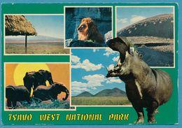 KENYA - TSAVO West National Park - Multivues - Hippopotame Lion Elephant - Kenya