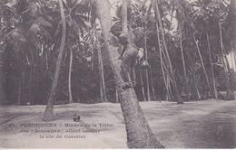 INDE - PONDICHERY  ( Dos Simple Messagerie Maritimes ) -  Hindou De La Tribu Des SOURAIRES - LA CUEILLE DU COCOTIER - Inde