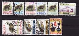 10x - Ethiopie