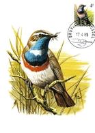 BUZIN.  LE  GORGE BLEUE à MIROIR BLANC - 1985-.. Oiseaux (Buzin)