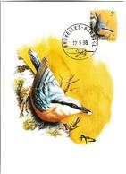 BUZIN.  LA SITTELLE TORCHEPOT - 1985-.. Oiseaux (Buzin)
