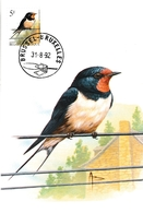 BUZIN.  L'HIRONDELLE DE CHEMINEE - 1985-.. Oiseaux (Buzin)