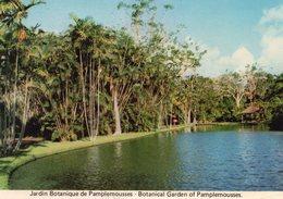 Ile Maurice Mauritius Le Jardin Botanique De Pamplemousses - Maurice