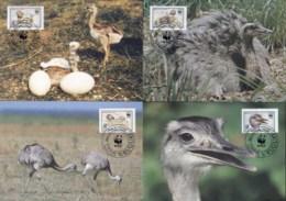 Uruguay 1993 WWF Greater Rhea, Bird Maxicards - Uruguay