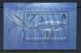 Ascension Is 2008 Marine Life, Sharks MS MUH - Ascension (Ile De L')