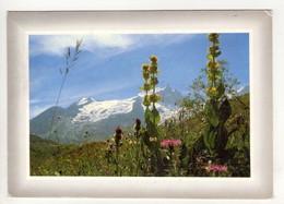 CP  10*15-ZA1727-FLEURS DE MONTAGNE 1987 - Fleurs