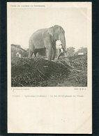 CPA - INDES - HYDERABAD (Dekkan) - Un Des 40 Eléphants Du Nizam  (dos Non Divisé) - Inde