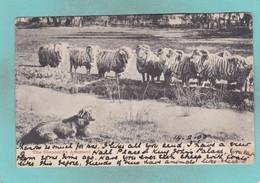 Old Post Card Of The Shepherds Assistant,Australia,J33. - Australie