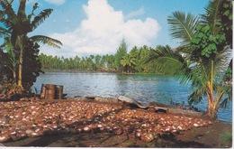 OCEANIE  - TAHITI - PRÉPARATION DU COPRAH - BAIE DE MATAIEA - Tahiti