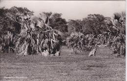 AFRIQUE - MOZAMBIQUE -  LION  ET LIONNE - Mozambique