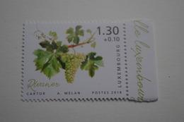 4-260 Vigne Vin Auxerrois Vine Grapes Rebe Trauben Viña Uvas Vite Uva Videira Vindruer  Wijnstok Druiven - Vins & Alcools
