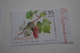 4-262 Vigne Vin Pinot Gris  Vine Grapes Rebe Trauben Viña Uvas Vite Uva Videira Vindruer  Wijnstok Druiven - Vins & Alcools