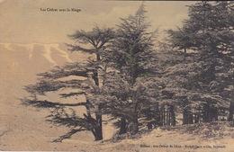 ASIE - LIBAN - LES CÈDRES AVEC LA NEIGE - - Liban
