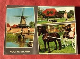 Nederland Mooi Friesland (paard Koe Klederdracht Windmolen ) - Paarden