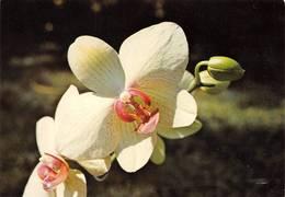 La Réunion Orchidée Eddif Photo Nourault - Other