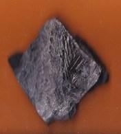 """Plante Du Carbonifère  Pin  """"Lebachia Piniforma"""" Permien (Corrèze,France) - Fossiles"""