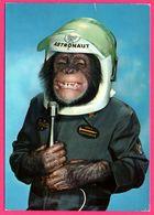 Monkey - Singe Humanisé - Astronaute - Casque - Micro - Sourire - KRUGER - 1982 - Monos