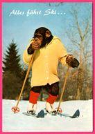 Charlie - Monkey - Singe Humanisé - Skieur - Ski - RUD. SUTER AG - Monos