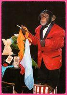 Cp Dentelée - Monkey - Singe Humanisé - Magicien - Prestidigitateur - Baguette Magique - Carte - Foulards - ANCO - Monos