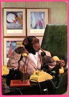 Monkey - Singe Humanisé - Homme D'Affaire - Téléphone - Cigare - ANCO - 1970 - Monos