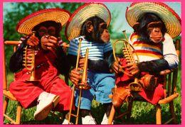 Monkey - Singe Humanisé - Singes Musiciens - Mexicain - Chapeau - Trompette - Instrument De Musique - Monos