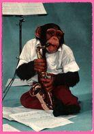 Cp Dentelée - Monkey - Singe Humanisé - Musicien - Saxophone - KRUGER - Monos