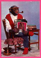 Monkey - Singe Humanisé - Singe Avec Lunettes Fumant La Pipe En Lisant Son Journal - News - KRUGER - Monos