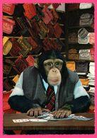 Cp Dentelée - Monkey - Singe Humanisé Qui Tient Un Magasin De Sacs - Carte De Jeu - Sac - MUVA - Monos