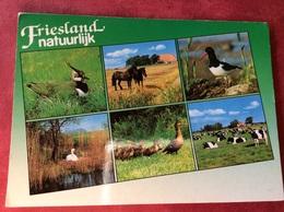 Nederland. Friesland Natuurlijk ( Eend Koe Paard Zwaan ) - Andere