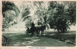 BOTANICAL GARDEN-SINGAPORE-1920 - Singapour