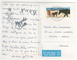 "Beau Timbre "" Chevaux "", Stamp , Sur Cp , Carte , Postcard - Namibia (1990- ...)"