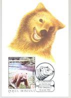 MAMMALS,BEARS, BROWN BEAR, CM, MAXICARD, CARTES MAXIMUM, 1993, ROMANIA - Bären