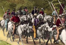 D13  CAMARGUE  Gardians Et Taureaux En Abrivado  ... - France
