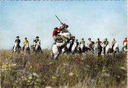 D13  CAMARGUE  Gardians  ... - France