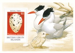 Virgenes Hb 63 - British Virgin Islands
