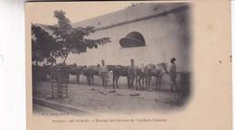 SENEGAL. DAKAR. PANSAGE DES CHEVAUX DE L'ARTILLERIE COLONIALE. MD PHOT. CIRCA 1900s. NON CIRCULEE- BLEUP - Senegal