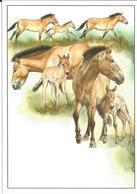 Picture Postcards Czech Republic Zoological Gardens I - Przewalski Horse 2016 - Chevaux