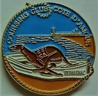 Lévrier - COURSING CLUB COTE D'AMOUR - HERBIGNAC  44410 .. - Animals