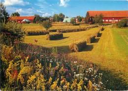 D1458 Swedish Landscape - Sweden