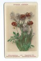 PHOTO ORIGINALE Véritable FIN XIXeme  E.LINDE&CO  PLANTE LILIUM POMPONICUM - Anciennes (Av. 1900)