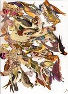Lot Images La Tour Cadet Roussel Auxerre - Oiseaux Papillons - Vieux Papiers